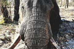 elephant-hunting-ekuja-hunting-safaris-1