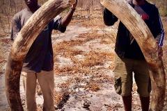 elephant-hunting-ekuja-hunting-safaris-10