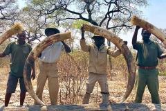 elephant-hunting-ekuja-hunting-safaris-8