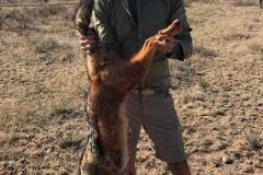 african-hunting-small-mammals-ekuja-hunting-safaris-4
